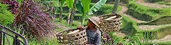 Holiday rental villas in Ubud